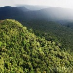 Bright Future for Southern Cardamom National Park