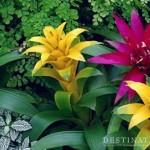 Laos Grows International Botanical Gardens