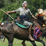 Horseback Fighting and Ancient Tribal Cultures EnthrallVisitors toSumba
