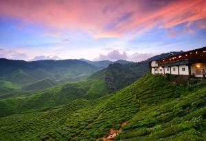Cameron Highlands Sunset_tea